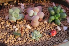 Succulant plants Stock Images