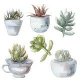 Succulent απεικόνιση συλλογής πράσινων εγκαταστάσεων Watercolor, που απομονώνεται στο άσπρο υπόβαθρο Στοκ Εικόνες