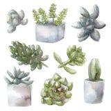 Succulent απεικόνιση συλλογής πράσινων εγκαταστάσεων Watercolor, που απομονώνεται στο άσπρο υπόβαθρο Στοκ εικόνα με δικαίωμα ελεύθερης χρήσης