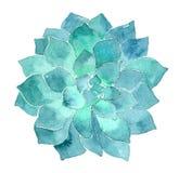 Succulent απεικόνιση Echeveria Watercolor Στοκ φωτογραφίες με δικαίωμα ελεύθερης χρήσης