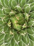 Succulent αφηρημένος στενός επάνω εγκαταστάσεων Στοκ Φωτογραφίες