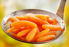 Succulent βρασμένα στον ατμό ολόκληρα καρότα μωρών Στοκ φωτογραφία με δικαίωμα ελεύθερης χρήσης