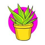 Succulent διανυσματική απεικόνιση lineart με συρμένη τη χέρι εγγραφή Στοκ Εικόνες