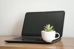 Succulent εγκαταστάσεις στο δοχείο στον υπολογιστή Στοκ εικόνα με δικαίωμα ελεύθερης χρήσης