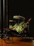 Succulent λουλούδι από Charismatique Στοκ φωτογραφία με δικαίωμα ελεύθερης χρήσης