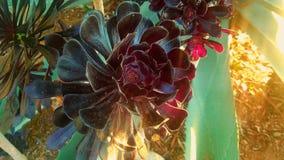 Succulent λουλούδι Στοκ φωτογραφία με δικαίωμα ελεύθερης χρήσης