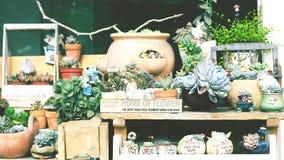 Succulent δοχεία Στοκ Φωτογραφίες