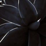 Succulent περίληψη Στοκ εικόνα με δικαίωμα ελεύθερης χρήσης