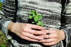 Succulent στα κομψά θηλυκά χέρια Στοκ εικόνες με δικαίωμα ελεύθερης χρήσης