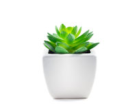 Succulent στο δοχείο Στοκ εικόνες με δικαίωμα ελεύθερης χρήσης