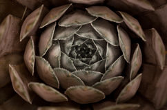 Succulent σχέδια Στοκ φωτογραφία με δικαίωμα ελεύθερης χρήσης