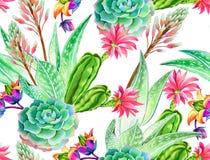 Succulent σχέδιο, άνευ ραφής σχέδιο Στοκ εικόνες με δικαίωμα ελεύθερης χρήσης