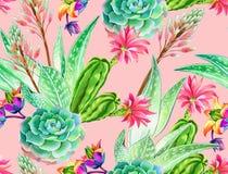 Succulent σχέδιο, άνευ ραφής σχέδιο Στοκ φωτογραφίες με δικαίωμα ελεύθερης χρήσης