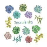 Succulent σύνολο Watercolor Στοκ Εικόνες