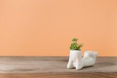Succulent υπόβαθρο έννοιας Στοκ φωτογραφία με δικαίωμα ελεύθερης χρήσης