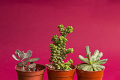 Succulent υπόβαθρο έννοιας Στοκ Φωτογραφία