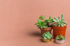 Succulent υπόβαθρο χρώματος έννοιας Στοκ Εικόνες