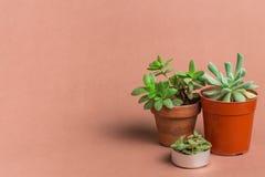 Succulent υπόβαθρο χρώματος έννοιας Στοκ φωτογραφία με δικαίωμα ελεύθερης χρήσης