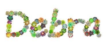 Succulent όνομα Debra διανυσματική απεικόνιση