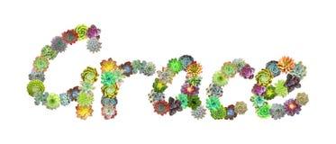 Succulent όνομα Grace Στοκ Εικόνες