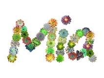 Succulent όνομα Mia απεικόνιση αποθεμάτων