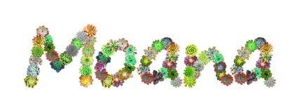 Succulent όνομα Moana απεικόνιση αποθεμάτων