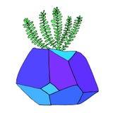 Succulent в баке в форме кристалла Яркий, Стоковое Изображение RF