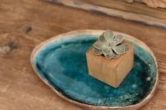 Succulent в деревянной коробке стоковая фотография