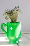 Succulent в зеленом баке на белом деревянном столе Стоковая Фотография