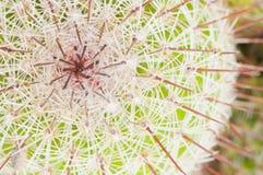succulent завода Стоковая Фотография RF