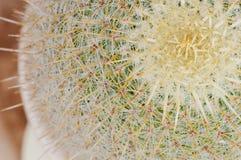 succulent завода Стоковое Изображение