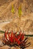 succulent завода стоковое фото rf