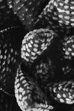 Succulent макроса Стоковое фото RF