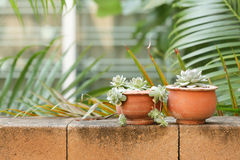 Succulent на кирпичной стене Стоковое Фото