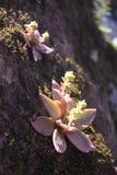 Succulent на утесе Стоковые Фото