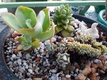 succulent stock fotografie