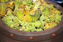 succulent Στοκ Εικόνες