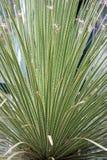 succulent Photos stock