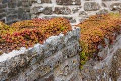 засаживает succulent Стоковое Фото