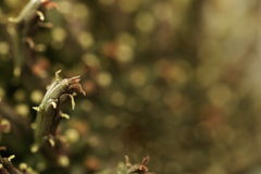 succulent Photos libres de droits