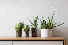 Succulent auf Anrichten, moderne Möbel Stockfotos