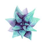 Succulent azul de la acuarela La visión desde la tapa Flor exótica stock de ilustración