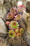 Succulent Stock Photos