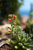 Succulent bloeien Royalty-vrije Stock Foto's
