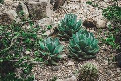 Succulent cactaceae detail photograph. Detail photograph of some succulent cactaceae royalty free stock photos