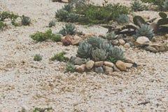 Succulent cactaceae detail photograph. Detail photograph of some succulent cactaceae royalty free stock image