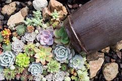 Succulent cactus Stock Photography