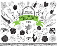 Succulent and cactus doodles garden Hand drawn floral  Stock Images