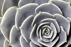 Succulent Cactus Plant In Garden. Pattern Stock Photos