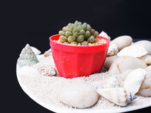 Succulent cactus Royalty Free Stock Photography